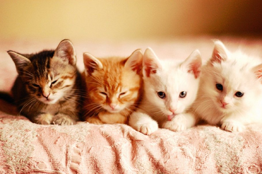 courtesy of Laurie Cinotto theittybittykittycommittee.com  The Medleys: Freddie Jean, Kirby, Peter and Linus